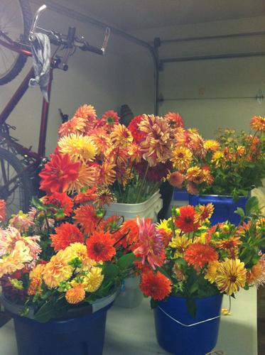 Amazing Flowers! | Rave Reviews