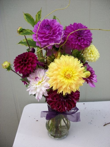 | Dahlia Arrangements Bouquets