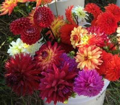 Cut Flowers | More Info