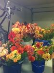 Amazing Flowers!