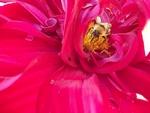 Bee on Spartatus