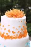 Ashley Cake 2013