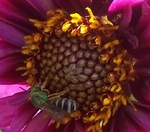 Bee Happy Green Bee