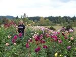 Swan Island Garden Contest