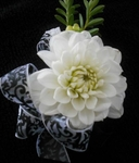 White Fawn Corsage 2013